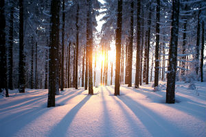 Winter - snow sunset