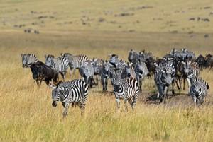 migration_safari_kenya