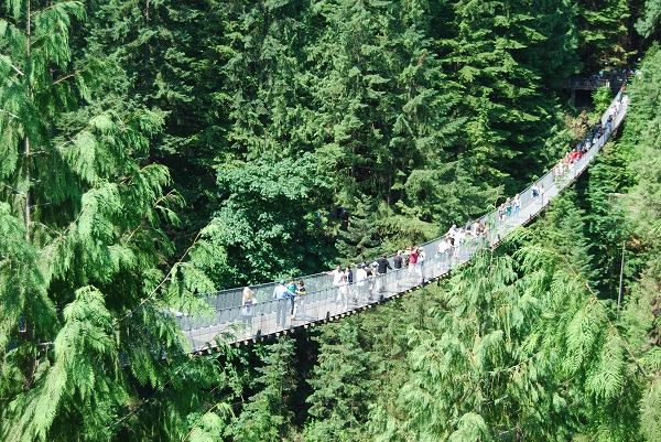 people walking over a suspension bridge in capilano amongst a forest